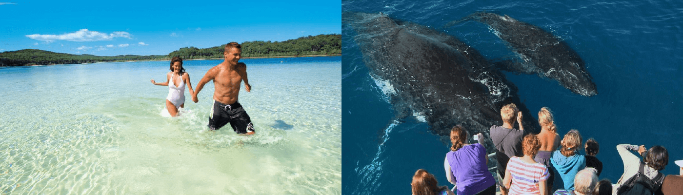 Premium Fraser Island and Whales Tour